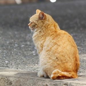 「5歳老けてみえる」「太りやすい」...猫背女子、恐怖の実態