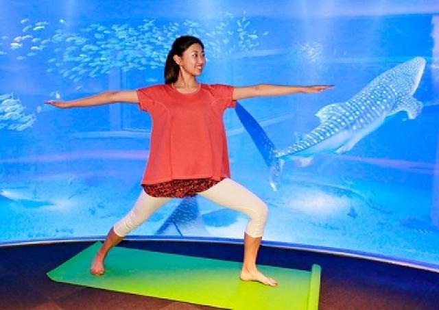 ジンベエザメの前でヨガ体感 夜の水族館でリラックス