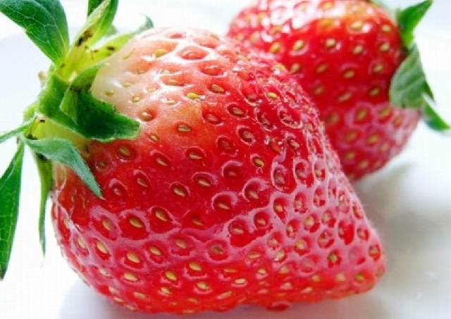 イチゴ狩り+工場見学+ショッピング=「20円」 JTB&三井アウトレットの太っ腹ツアー