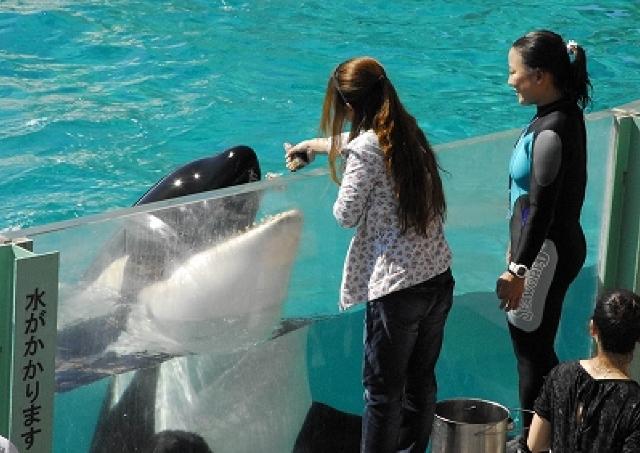 シャチやイルカに「サイン」を出せる! 鴨川シーワールド「満喫体験」