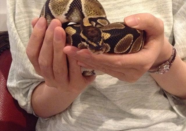 極上のさわり心地とつぶらな瞳にメロメロ 爬虫類好き記者が「東京スネークセンター」でヘビと交流してきた