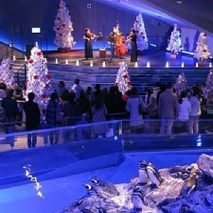 夜の水族館で過ごす幻想的なXmas ペンギンと弦楽器が奏でるクリスマスソングに耳を澄ませば...