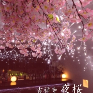 雨でも寒くても楽しめちゃう幻想的な「夜桜」 武蔵野市で3月からスタート