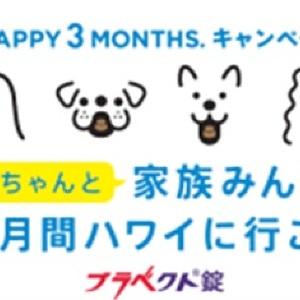 ワンちゃんと家族で3か月間ハワイに行ける! 愛犬家必見のキャンペーンスタート