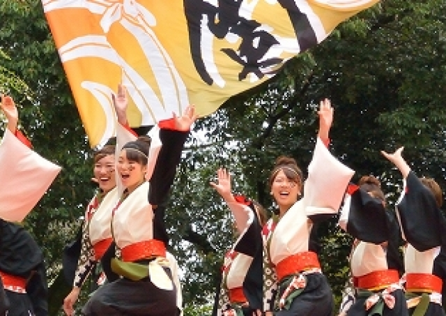 古都・京都がよさこい一色 梅小路公園・岡崎公園等で「さくらよさこい」