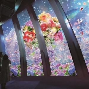 バラやアジサイが舞い降りる 横浜・八景島シーパラダイスで花と光の特別演出