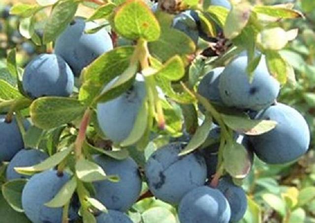 あの果実でシワが改善? 「美容パワーのあるフルーツ」最前線