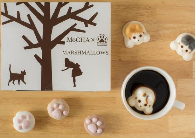 ぷにーーーーの触感そのまんま! 猫カフェMoCHAの「肉球マシュマロ」