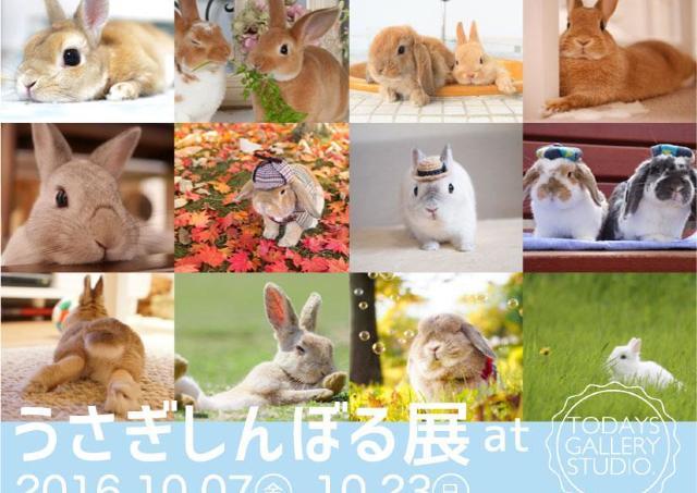 もふりたい!! ウサギ専門の写真家も出し惜しみなし!の「うさぎしんぼる展」
