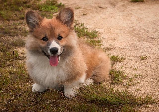 人間よりよっぽど「普通」だった キラキラ感ゼロの犬の名前ランキング