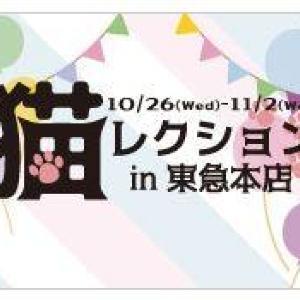 東急渋谷本店で「猫レクション」 岩合光昭さんのにゃんこ写真でネコの1日を目撃