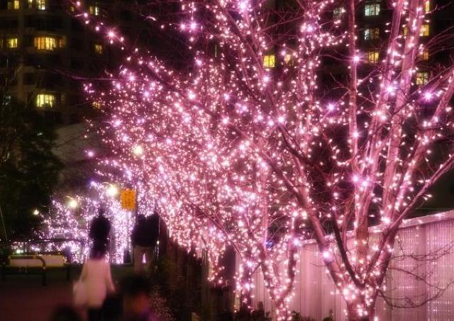 目黒川で桜色イルミがスタート ことしは史上最大規模の桜並木に