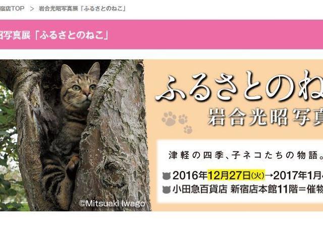 小田百貨店新宿で岩合光昭写真展「ふるさとのねこ」 年末年始はにゃんこ写真に癒されよう