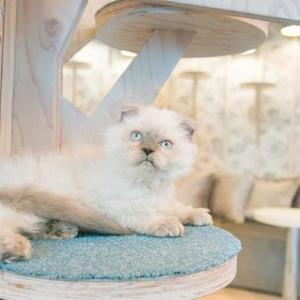 おしゃれすぎる「猫カフェMoCHA」が竹下通りにOPEN 原宿らしい店内でにゃんこと触れ合おう