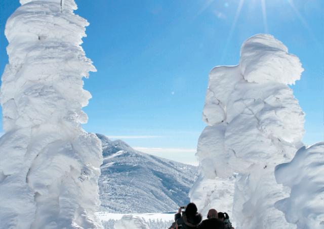 希少な樹氷 雪原の見事な自然美を楽しもう