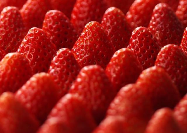 朝摘み「紅ほっぺ」約3000個を試食! 西武池袋本店で大盤振る舞い