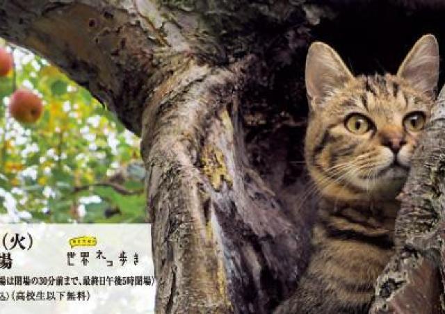 美しい津軽の四季と子ネコたちの物語「ふるさとのねこ岩合光昭写真展」