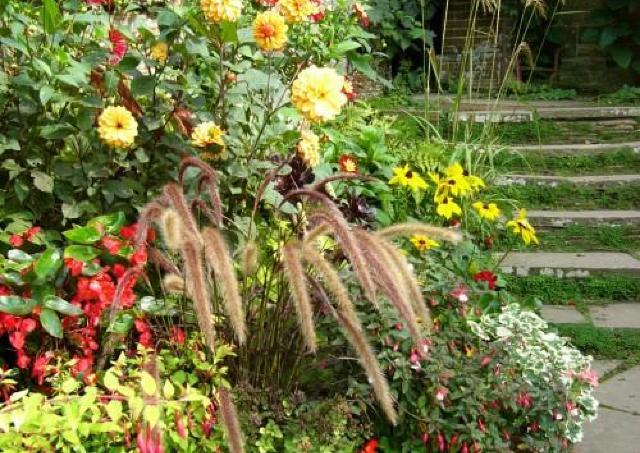 秋まで咲き続ける「一年草」の育て方 500円のワークショップ開催