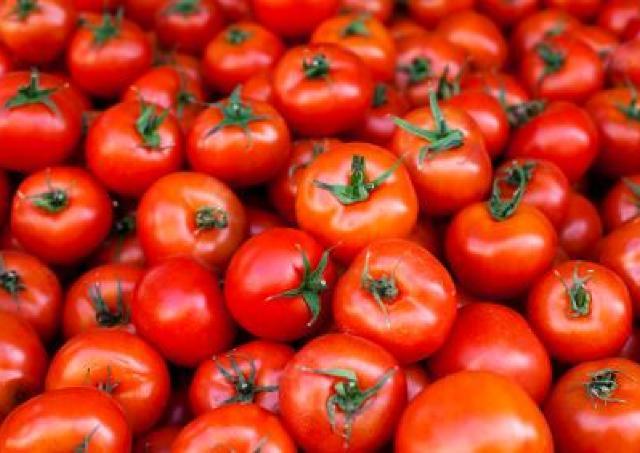 右も左もトマト、トマト、トマト... 造り酒屋で「トマト祭り」開催