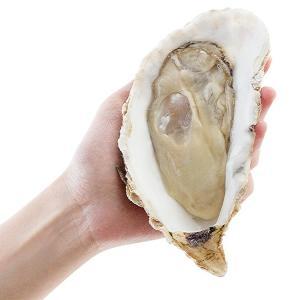 インパクトすごい...! 「超特大」牡蠣がのった「XXL極プレート」が限定登場