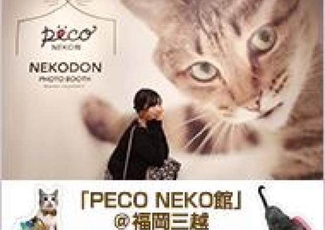 「PECO NEKO館」が福岡三越に登場!