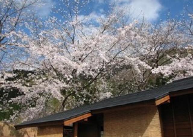 桜の季節も宿泊料そのまま 水上温泉「やえ野」