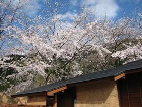 たまにはリッチに桜旅しません?