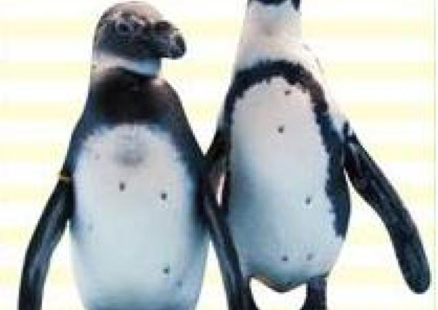 ららぽーとにペンギンやってくる! 盛りだくさんのGW
