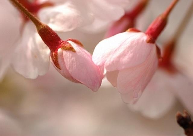 キスに積極的な日本女性 5人に1人は「恋人と毎日キス」