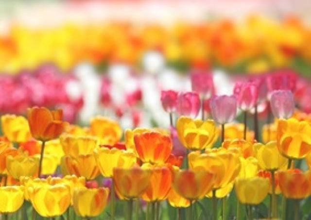 冴えない記念写真にサヨナラ 初夏の写真「キレイ撮り」4つの極意