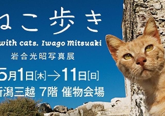 ネコ好きにはたまらない! 動物写真家・岩合光昭写真展