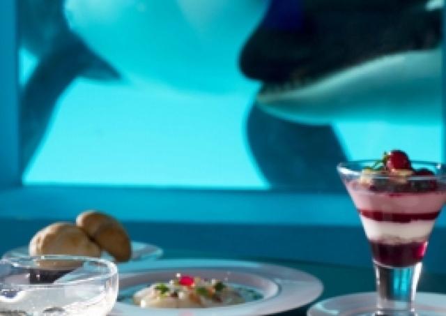 料理長こだわりの料理と「シャチと記念撮影」 鴨川シーワールドの入園&宿泊プラン