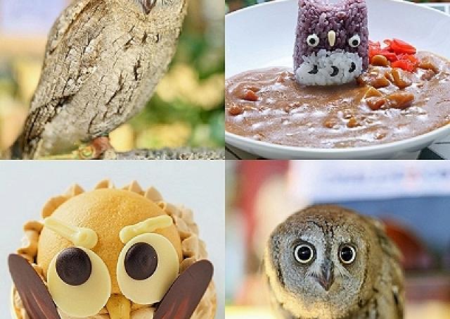 ことりカフェで今度は「フクロウ祭り」 フクロウカレーあるよ!