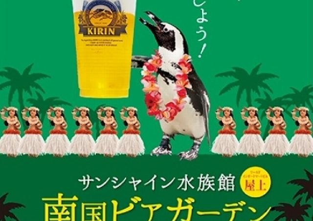 華麗なペンギンの泳ぎをアテに一杯 サンシャイン水族館にビアガーデン