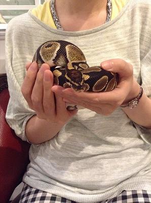 极佳手感与浑圆瞳孔让人神魂颠倒 喜爱爬虫类动物的记者