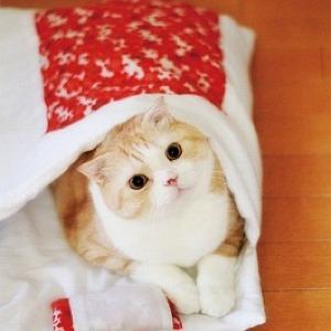 にゃんこのかわいい寝姿を自慢しちゃおう フェリシモ猫部から「猫のお布団」発売