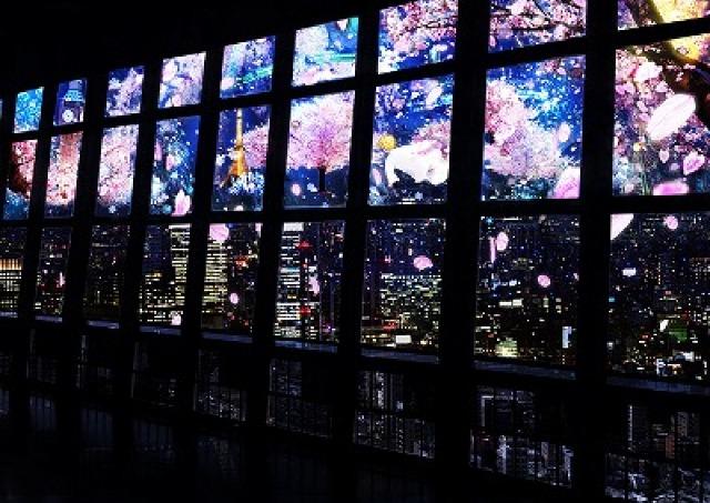 息をのむ「桜×夜景」の共演 東京タワーで360度サクラ舞い散るプロジェクションマッピング