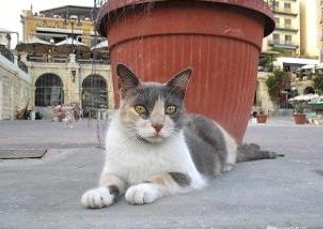 ネコまみれに次ぐネコまみれ... 愛猫家が選んだ「世界の猫スポット」ランキング