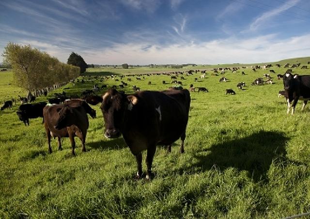 安全・安心のニュージーランド産チーズ&バター こんなにおいしかった注目の乳製品