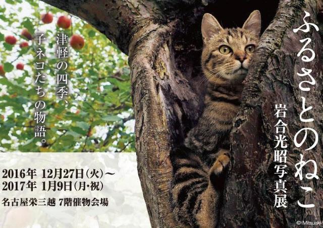 津軽の四季と子ネコたちの物語 「ふるさとのねこ 岩合光明写真展」