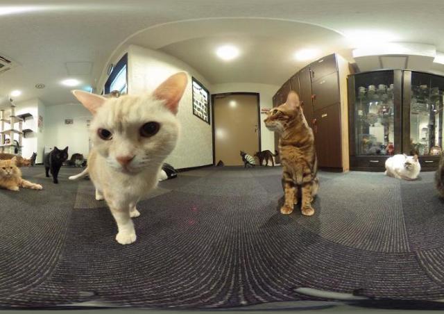 もうかわいい表情を撮り逃さない 猫カフェ「きゃりこ」で360度カメラを無料貸し出し