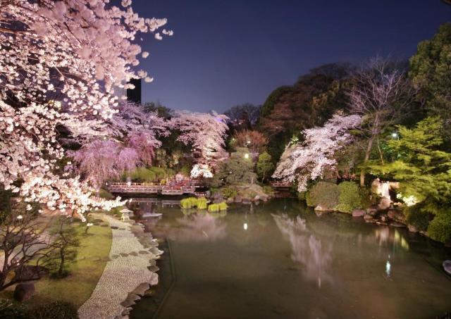 庭園に咲き誇る夜桜を眺めながらフレンチを味わう 「原宿 東郷記念館」で贅沢すぎるお花見