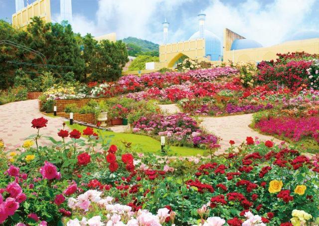 恒例「大バラまつり」が今年も開催 新スポットに世界のバラ2万本