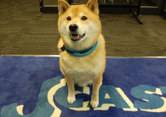 人気沸騰中の「柴犬まる」が宣伝部長に! 年賀状用素材が無料で使えるよ