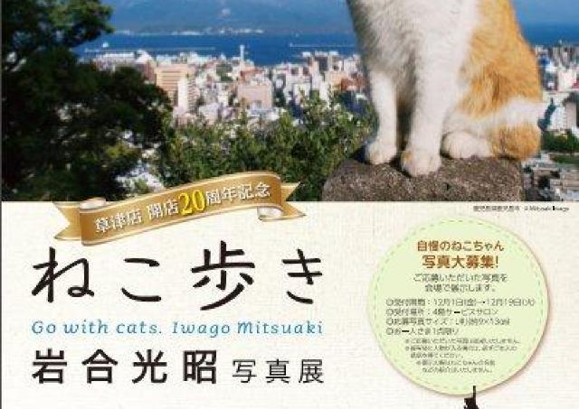 各国の猫の魅力が満載 近鉄百貨店草津店で写真展「ねこ歩き」