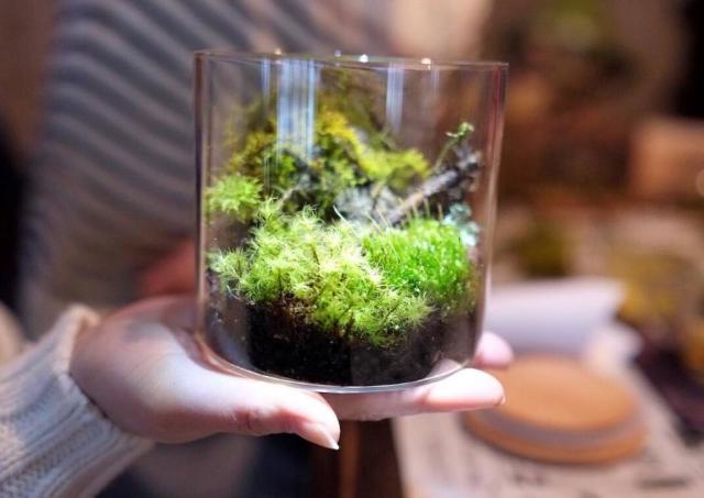 木の枝や苔などの素材を使って苔テラリウムを作ろう