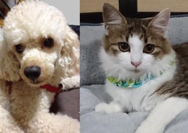 ネコやイヌとのコミュニケーションを学ぼう!