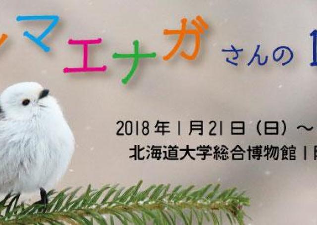 小鳥界のアイドル!シマエナガさんの12か月を追う