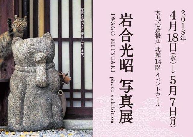 ねこを通して京都を見る 岩合光昭写真展「ねこの京都」開催