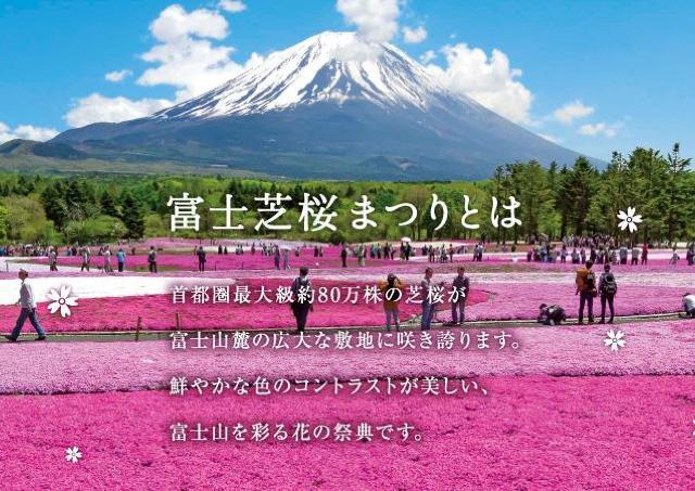 富士山を彩る花の祭典!芝桜まつり